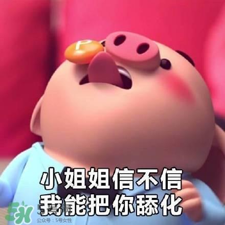 猪小屁表情包是什么?猪小屁表情包为什么这么火?